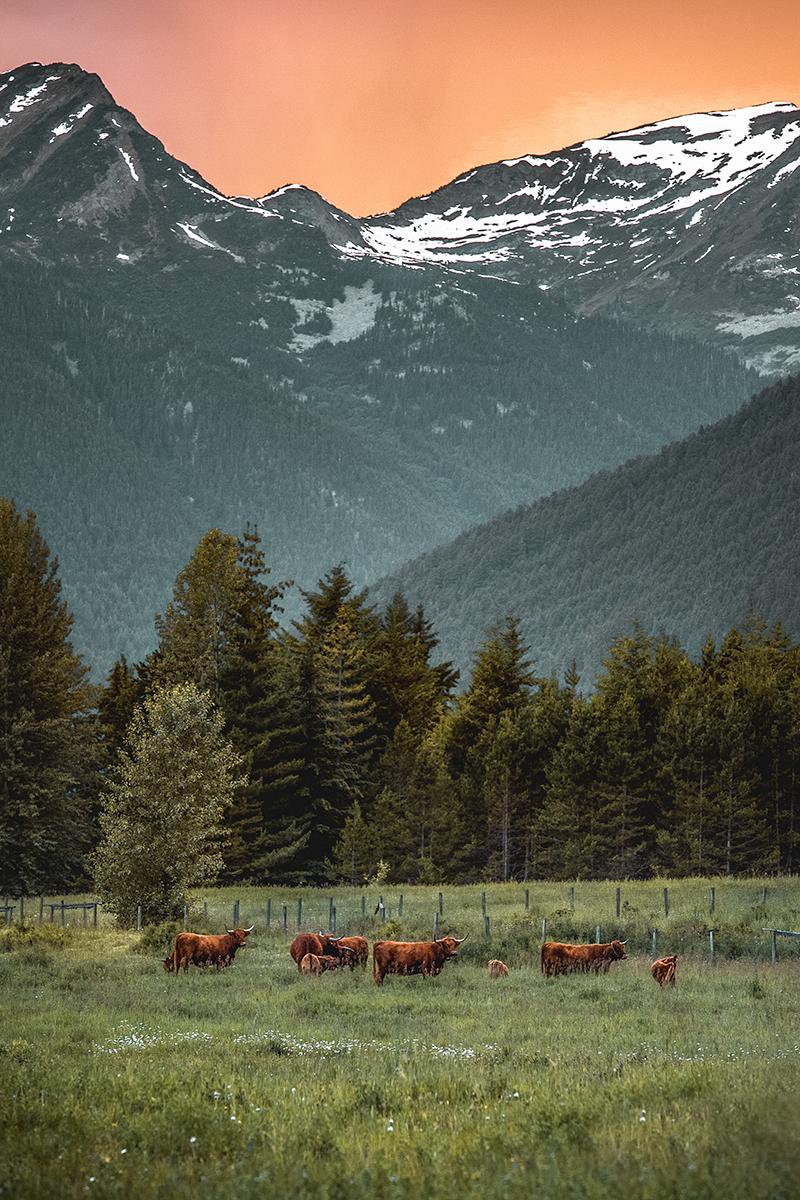 Western Beauty