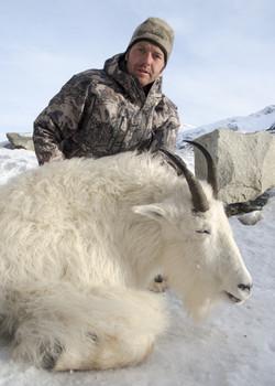 dm Mountain Goat.