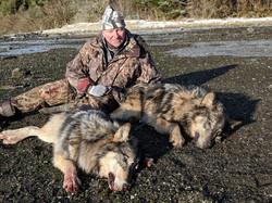 Gary's wolves