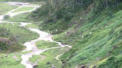 alpine herd