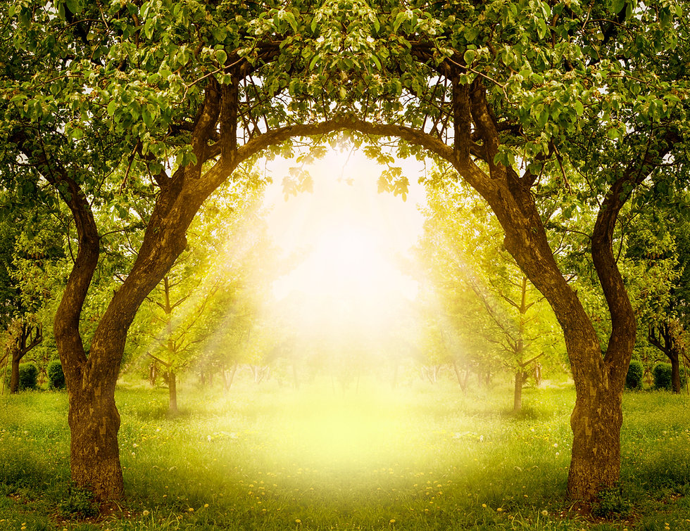 Fantasy apple trees garden with natural arch entrance and sun rays, magical door gates in