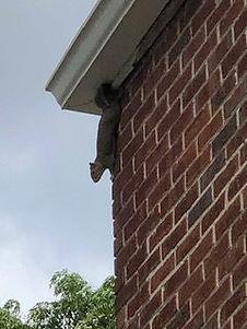 squirrel-removal-e1561560238324.jpg