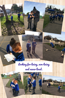 Busy learning in Chestnut