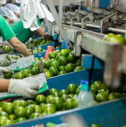 Lime represents 98% of Brazilian citrus exports abroad