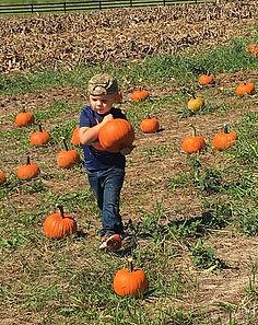 pumpkin pickin_edited.jpg