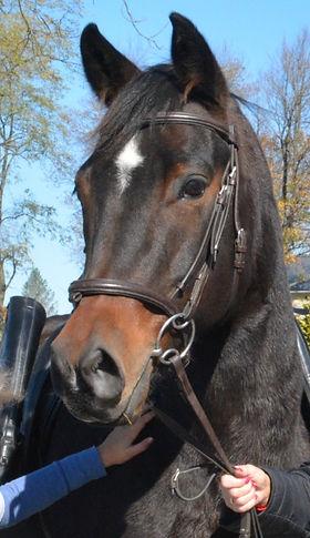 Finney profile cut_edited.jpg