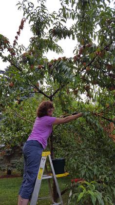 reach for peach.jpg