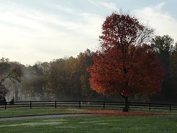 mist on farm.jpg
