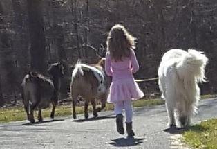 walking fu & goats.jpg