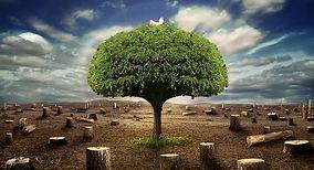 ecologia-social.jpg