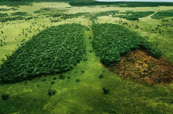 mal_na_ecologia2 (1).jpg