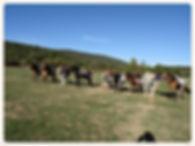 équitation sport loisir enfants activités équitation aude 11350 balades cso dressage pension débourrage poneys jument cheval élevage poulain horse ball