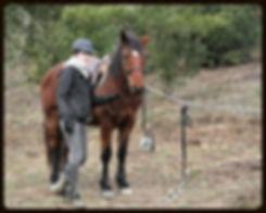équitation sport loisir enfants activités équitation aude 11350 balades cso dressage pension débourrage