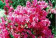 kealani flowers 9.jpg