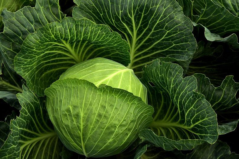 cabbage-3722498_1920.jpg
