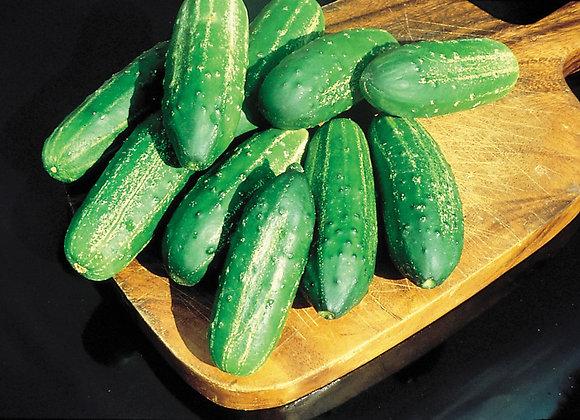 Regal Cucumbers