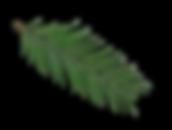 Pine_Stem2.png