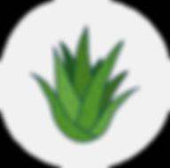 Aloe_300x.png