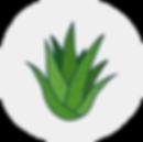 Aloe@300x.png