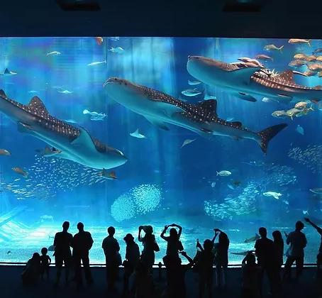 Los 12 aquariums más impresionantes del mundo que tienes que ver