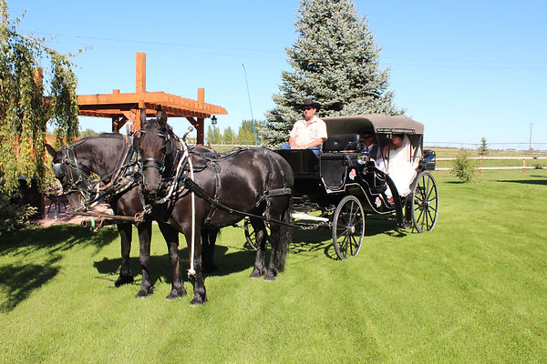 Horses, carriage, transportation