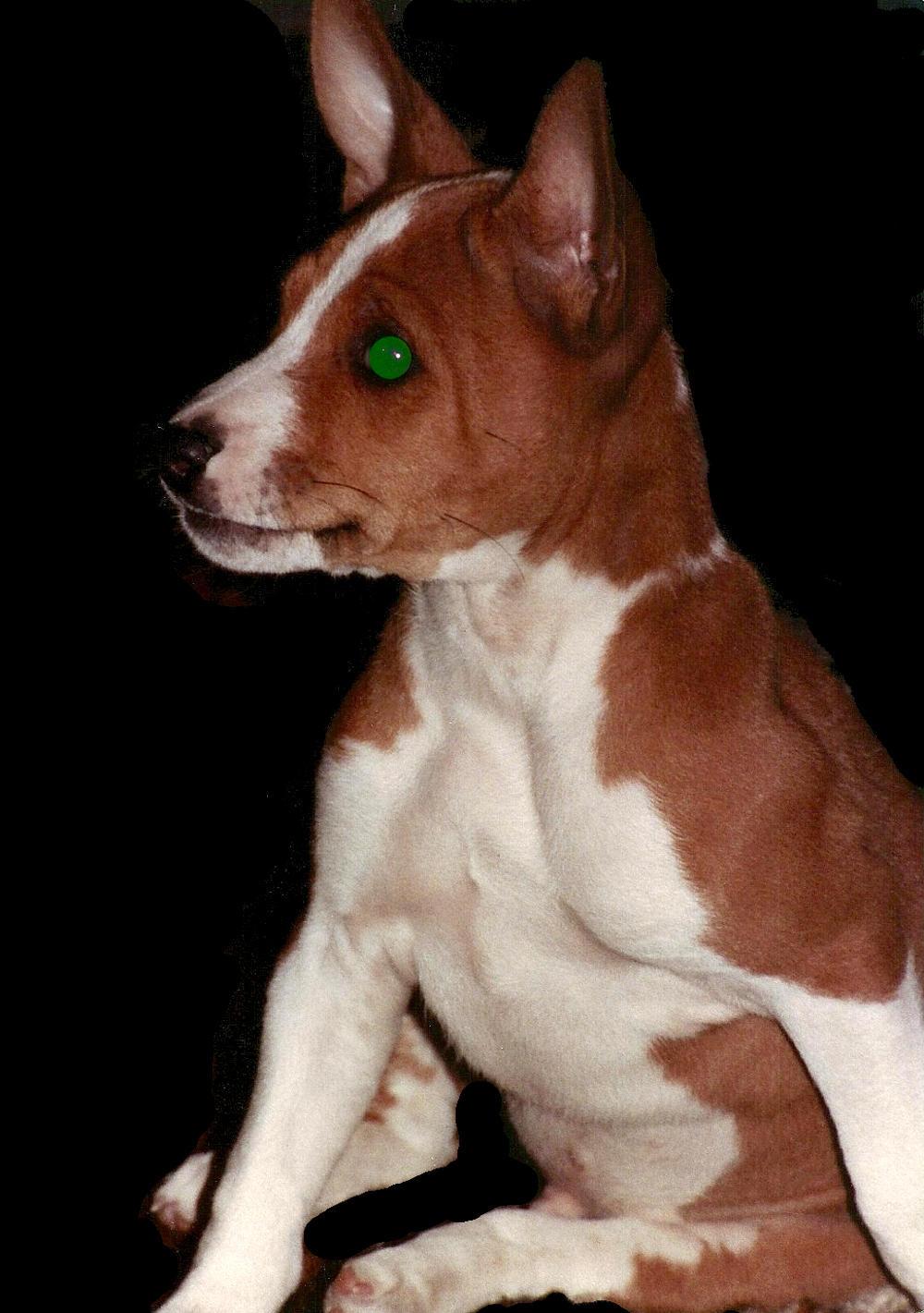 INFriend Crleiu - a replipup with glowing green eyes.