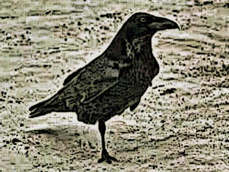 One Leg Raven