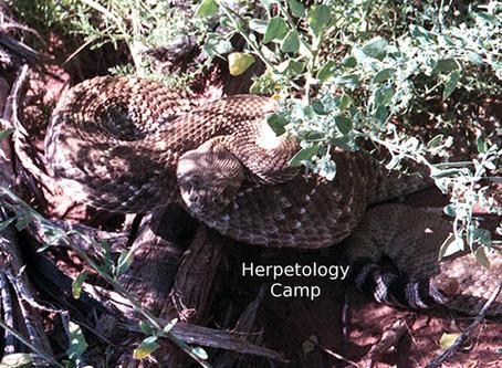 Herpetology Camp