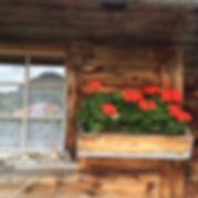Blume_vor_Hütte.JPG