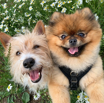 Two Cute Smiling Dogs