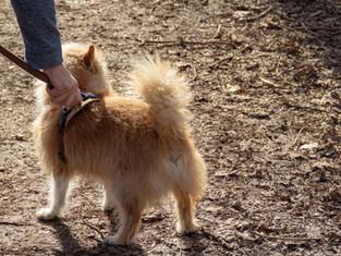 Dog on a lead