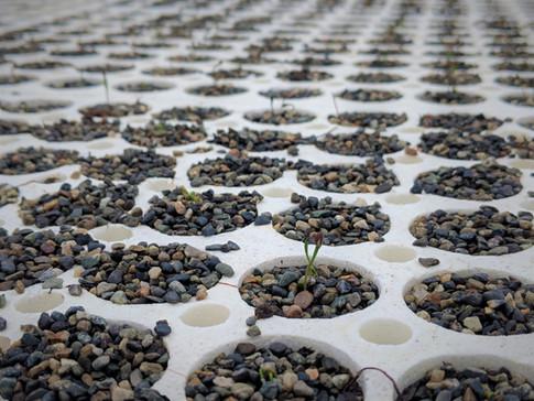 Growing little trees
