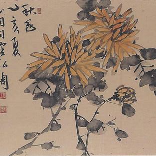 황국/黃菊/Yellow chrysanthemum