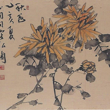 황국/黃菊/Yellow chrysanthemum