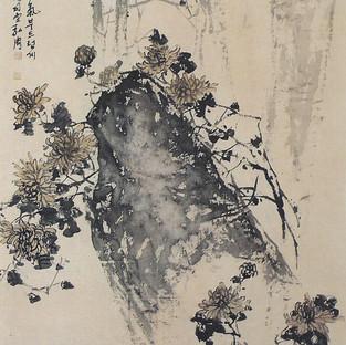 국화/菊花/Chrysanthemum