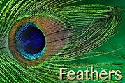 Active Wild Bird Feather.jpg