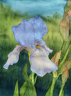 Untitled (Iris)