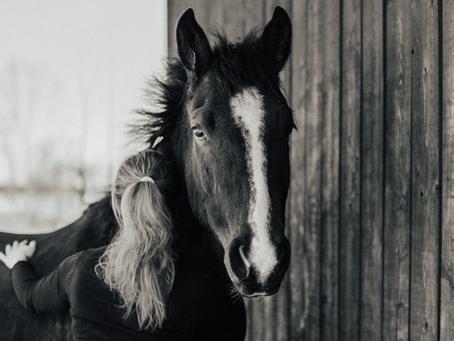 Döm inte hästen och tro att den bråkar av illvilja