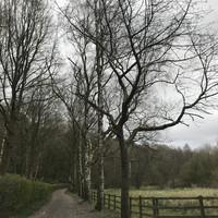 Walking through Ealees, Littleborough