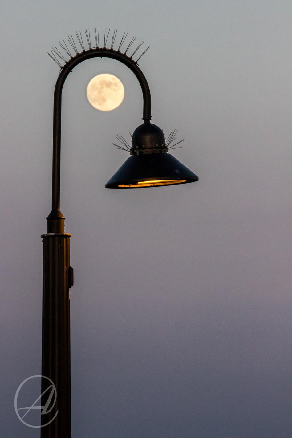 LAMP LASHES