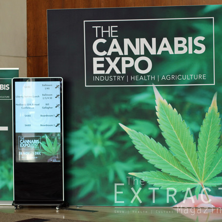 Our thoughts - The Cannabis Expo - Sandton