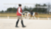 Pathway to Para-Equestrian Dressage.png