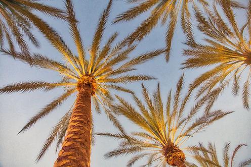 palm-trees-1470707.jpg