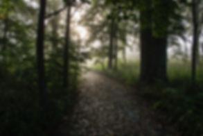woods-path.jpg