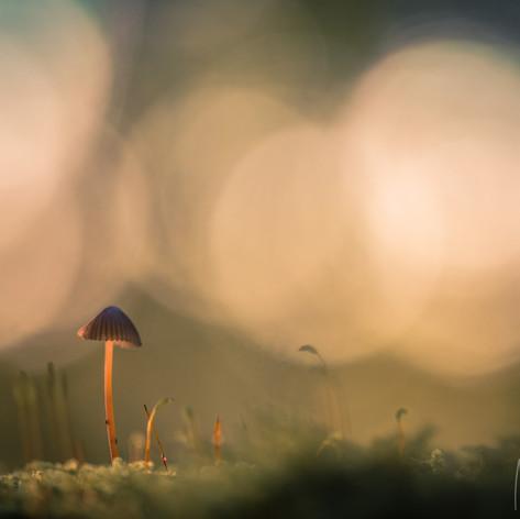 paddenstoeltje, Gorp en Roovert