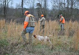 Guided Quail Hunt