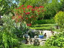 Le jardin accès piscine