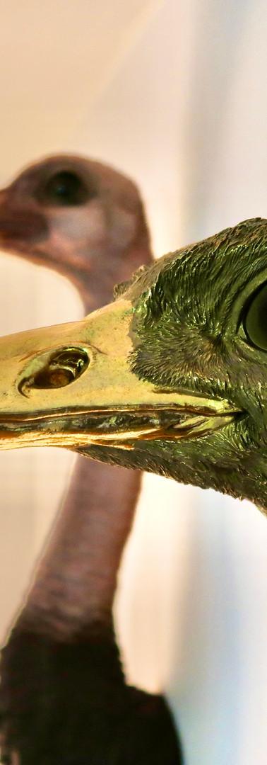 Struisvogels Betsie & Getsie