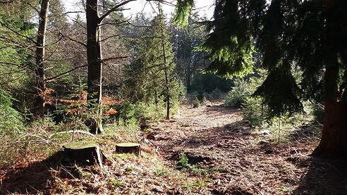 mooie-bossen-bij-Beerze-in-de-buurt-van-