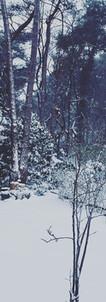 Witte Winter